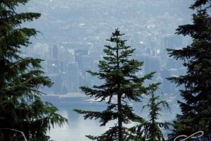 IMGP4410_Vancouver_GrouseMountain