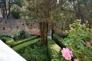 Casa del Petrarca: giardino / Petrarca's house: the garden