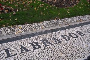 100_6481_mosaico pavimentazione.jpg