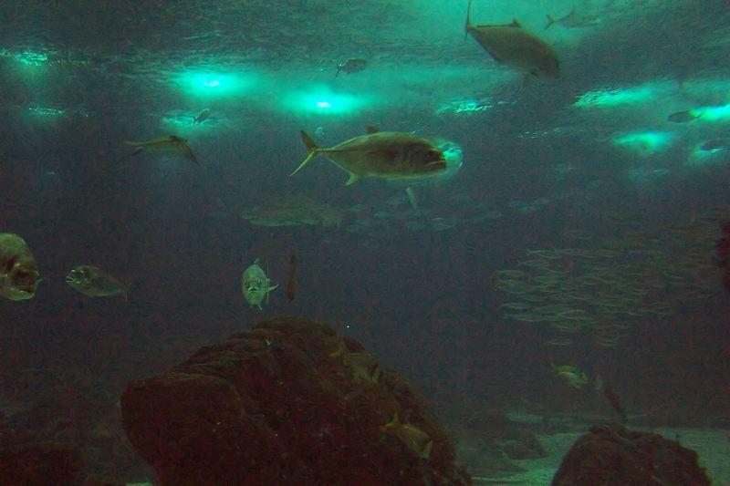 100_5896_ParqueDasNacoes_Oceanario.jpg