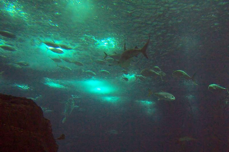 100_5900_ParqueDasNacoes_Oceanario.jpg