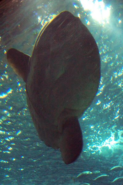 100_5913_ParqueDasNacoes_Oceanario.jpg