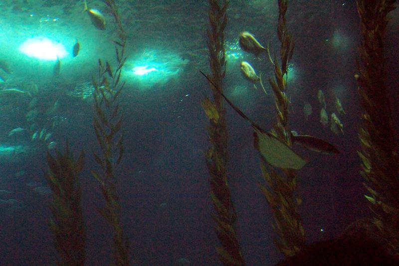 100_5928_ParqueDasNacoes_Oceanario.jpg