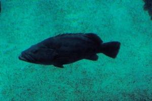100_5895_ParqueDasNacoes_Oceanario.jpg