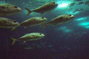 100_5916_ParqueDasNacoes_Oceanario.jpg