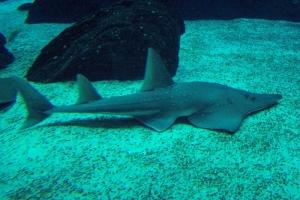 100_5920_ParqueDasNacoes_Oceanario.jpg