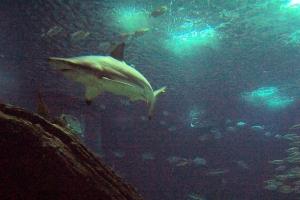 100_5929_ParqueDasNacoes_Oceanario.jpg