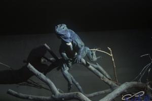 IMGP6783_zoo_iguana
