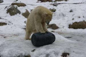 IMGP6834_zoo_orso polare