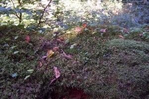 100_5167_parco_primordiale_tronco caduto con nuove piante.jpg
