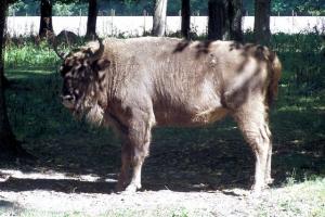 100_5203_bici_riserva naturale_bisonte.jpg