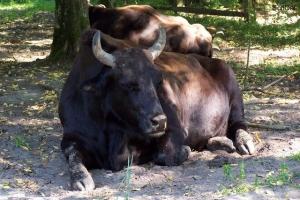 100_5213_bici_riserva naturale_bisonte.jpg