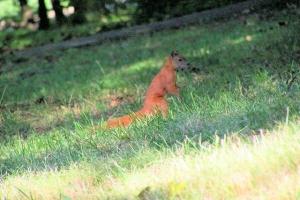 100_3831bis_parco lazienki_scoiattolo.jpg