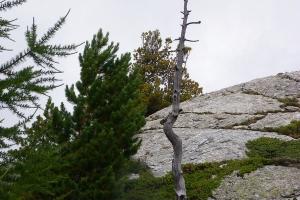 IMGP6192_flora-tronco secco