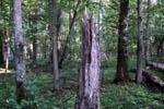 Riserva naturale Białowieża
