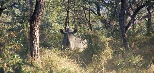 x-sudafrica-rino2