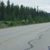 2-Calgary-Jasper
