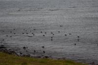DSC_0088_strada holmavik-verso djùpavik-gravel-uccelli