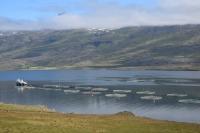 DSC_0027_strada-verso seydisfjordur-allevamento ittico
