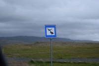 DSC_0047_strada-verso holmavik-hrutafjordur-cartello uccelli