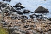 DSC_0185_isola hrisey-uccelli