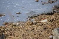 DSC_0187_isola hrisey-uccelli