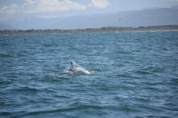 DSC_0088_husavik-zodiac-balena