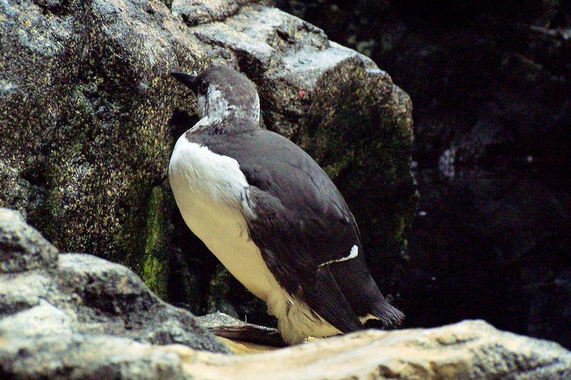 100_5892_ParqueDasNacoes_Oceanario.jpg