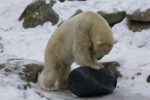 IMGP6839_zoo_orso polare