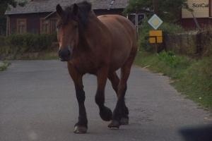 100_5246_cavallo sulla strada.jpg