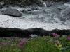 IMGP5770_lungo la Dora Valgrisenche-neve perenne