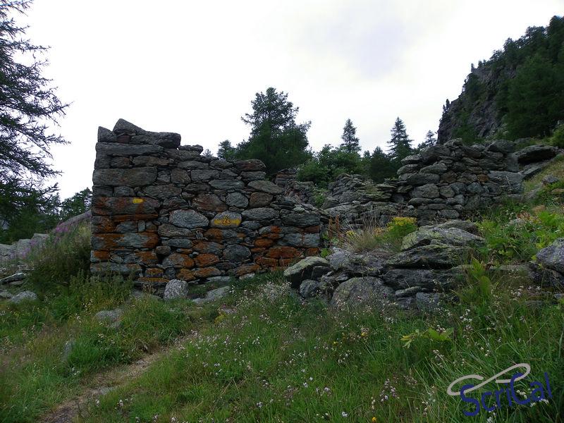 IMGP6141_bosco larici-ruderi meta percorso