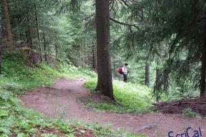 IMGP6116_bosco larici