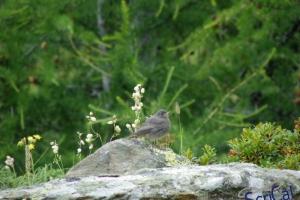IMGP6146_fauna-uccellino