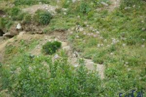 IMGP6147_fauna-marmotte