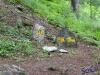 IMGP6119__bosco larici-segnavia