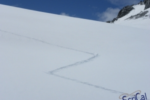 IMGP6006_sullovovia verso Aiguille du Midi-tracce alpinisti