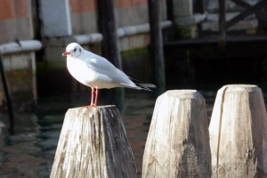 uccelli01