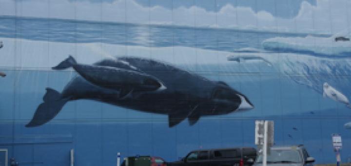 Viaggio in Alaska. Anchorage: un cane, un granchio e salmoni pescati in pausa pranzo (1)