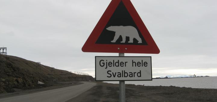 Svalbard: un orso bianco uccide un ragazzo e ne ferisce altri quattro