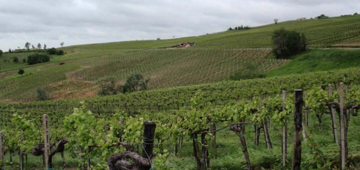 Val Tidone e Pavia: in giro per cantine