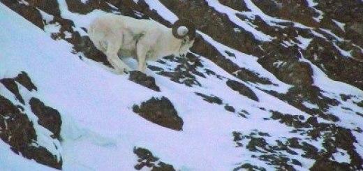 La notizia che non ti aspetti: 36 gradi in Alaska
