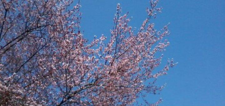 Prove di primavera