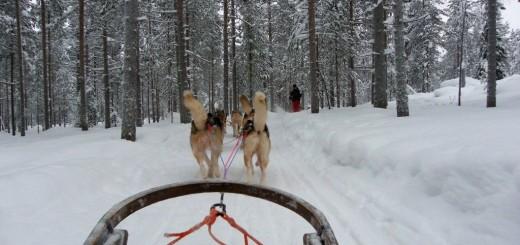 Lapponia: Alla guida della sled dog, la slitta trainata dai cani husky