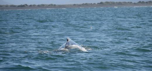 Islanda: Il giorno delle pigre balene islandesi – Húsavík