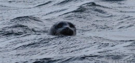 Islanda, il giorno della fattoria di torba e delle foche